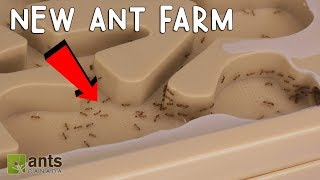 MY FIRE ANTS' NEW ANT FARM!
