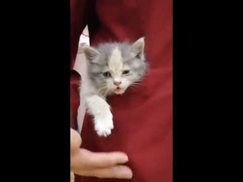 【抖音】寵物合集40 - 你個小嫩貓,非要萌死人嗎?