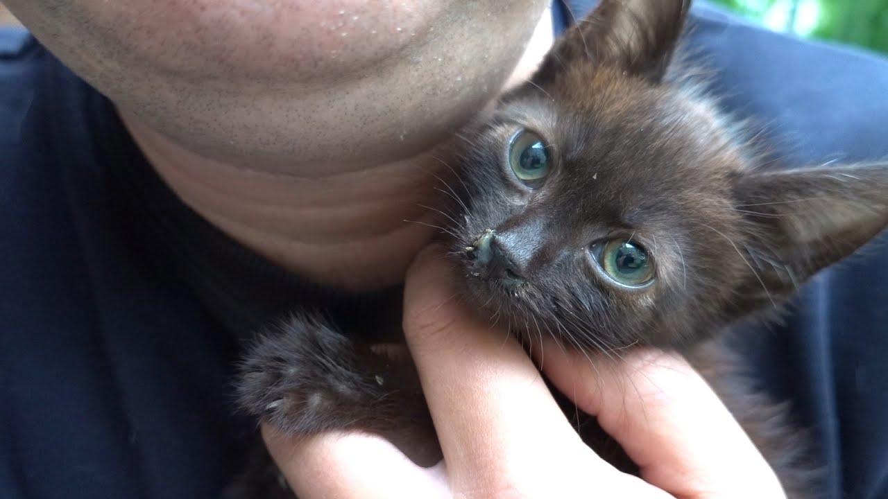 I found a new little black kitten on the street
