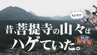 昔、菩提寺の山々はハゲていた?:クイズ滋賀道