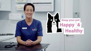 How To Spot and Treat Kennel Cough In Dogs   Vets4Pets