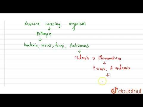 Ascaris humán tünetek felnőtteknél