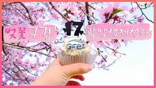 광양경제청 17주년 축하해, 벚꽃 구경을 파도리와 함께. #Shorts