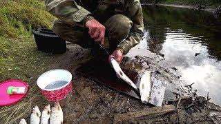 Отчет о таежной рыбалке