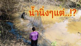 #ล้อมปลาใต้ก่อไผ่เห็นเงียบๆน้ำนิ่งๆนึกว่าไม่มีปลาแต่สุดท้าย..!?