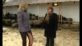 Смотреть онлайн Романовские овцы содержание и уход