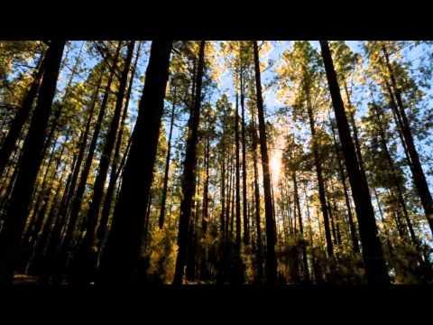 Индейская этническая музыка  -- Флейта, плюс Nature (2011)