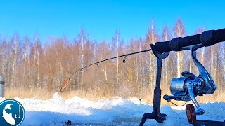 Ловля на фидер плотву зимой