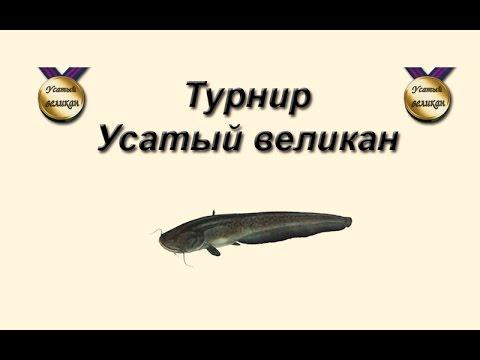 Русская Рыбалка 3.99 Турнир Усатый великан #2