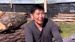Mongolia The Pig  Milk V1
