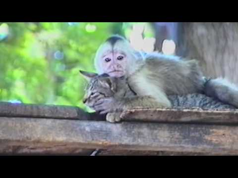 Loveful monkey and tolerant cat