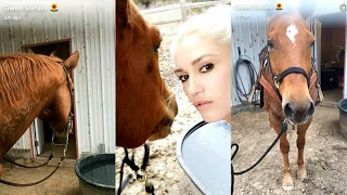 Gwen Stefani taking care of a horse on Snapchat | February 19 2017