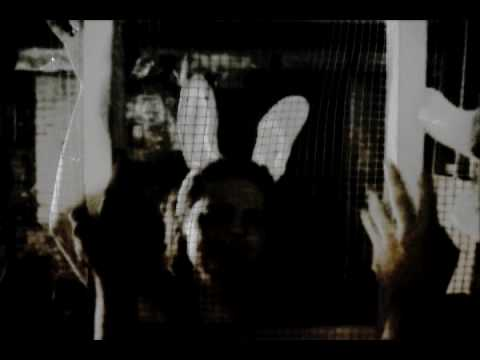 Mothman Apparatus - Count All The Animals Music Video