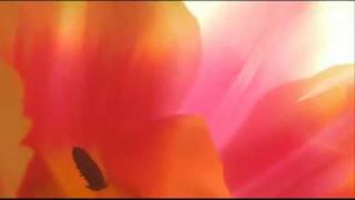 Antonio Vivaldi: Sinfonia for strings & b.c. in B minor (RV 168)