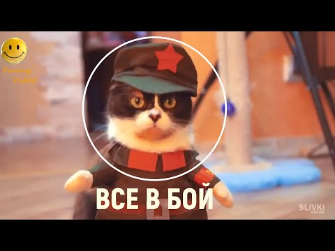 , title : 'Новые Приколы!!! Приколы с Животными 2020!!!'