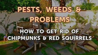 How to Get Rid of Chipmunks & Red Squirrels