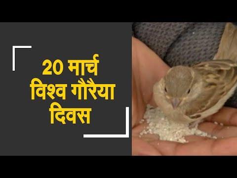 It's World Sparrow Day | जानिए क्यों 20 मार्च को मनाया जाता है विश्व गौरैया दिवस