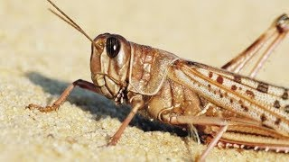 BATTLING LOCUSTS: Aerial pesticides spraying in Wajir underway, locusts threatening food security