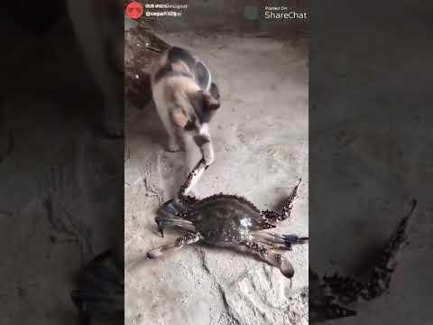 Котик пострадал из-за любопытства