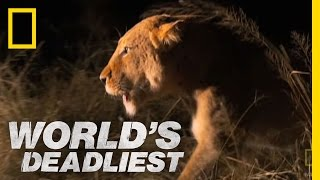 World's Deadliest - Lioness vs. Hyenas
