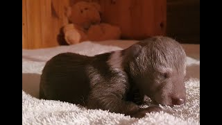 Orphan Bear Cub Moisey / Медвежонок-сирота Моисей