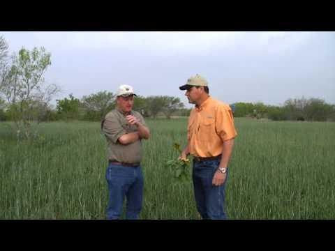Perennial Food Plots, Part 3