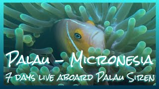 preview picture of video 'Amazing diving & 7 days live aboard Palau Siren - Palau Micronesia'