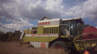 preview picture of video 'Žně 2014 | Claas dominator maxi 88sl a Zetor 7711 (real souds)'