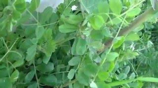 お馴染みのマメ科の野草名前は忘れてしまう程ですが、生き生きと力強さに満ちあふれて