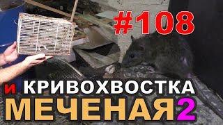 """#108. Реалити Шоу """"ALCARATZ"""". ДОМ 2 - Крысы. Меченая2 и Кривохвостка"""