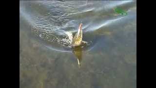 Воблеры дайва х кросс моретан-120