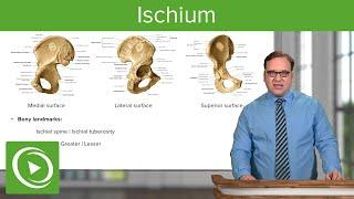 Ischium: Location, Body & Bony Landmarks – Anatomy | Medical Education Videos