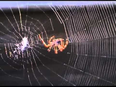 how to get rid of baby spiders on ceiling