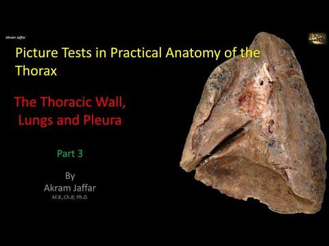 Test obrazkowy z anatomii klatki piersiowej - ściana klatki i płuca (część 3)