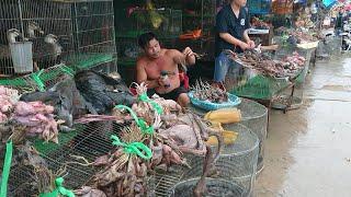 wildlife trade CHỢ ĐỘNG VẬT HOANG DÃ LỚN NHẤT MIỀN TÂY SỰ THẬT BÀY RA TRƯỚC MẮT   wild animals