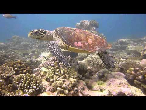 Malediven 2012 - Royal Manta, MY Royal Manta,Malediven
