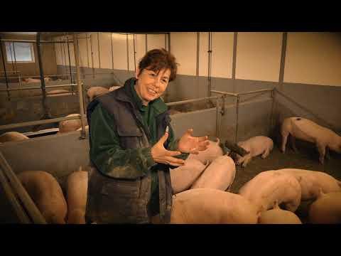 Schweinehaltung konventionell - Gesteinsmehl