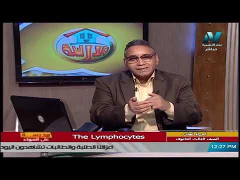 أحياء لغات للصف الثالث الثانوي  2021 -  الحلقة 26 – The Lymphocytes