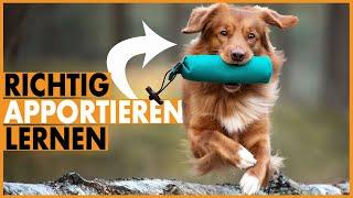 Hund Apportieren beibringen I Dummytraining mit dem Hund richtig aufbauen I Einfach und erfolgreich