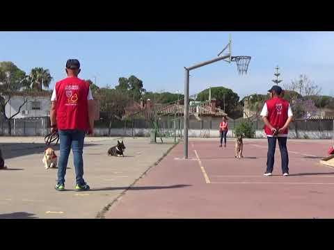 Dingo Paquiki lleva el conocimiento animal al colegio La Arboleda