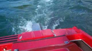preview picture of video 'Moko The Dolphin Loves Playing with the bubbles Whakatane River'