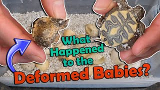 Mystery Turtle Eggs Hatching- Part 2! by Snake Discovery