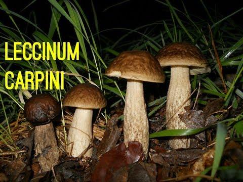 Come pulirsi alloggia una posizione di fungo