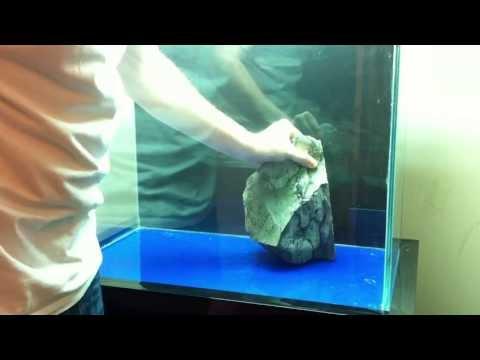 My Tanganyika Lake Cichlids tank - смотреть онлайн на Hah Life