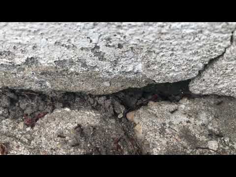Over Seven Feet of Ants Found at the Back Door in Belmar, NJ