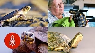 Turtles and Tortoises: Stories of Our Friends in Shells