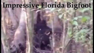 Impressive Florida Bigfoot Video. Sasquatch ripping up a tree