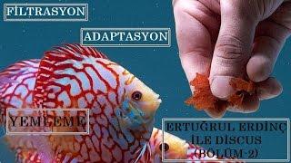 Discusta Adaptasyon ve Filtreleme