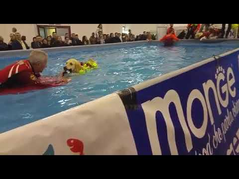 good rescue dogs, interesting demonstration