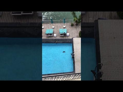 Affen im Pool